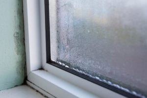 window mold removal needed
